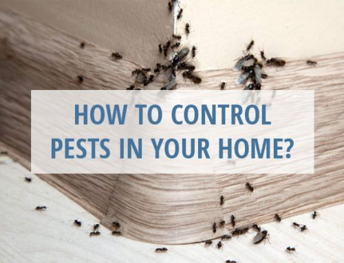 How to Control Pests in Your Home?