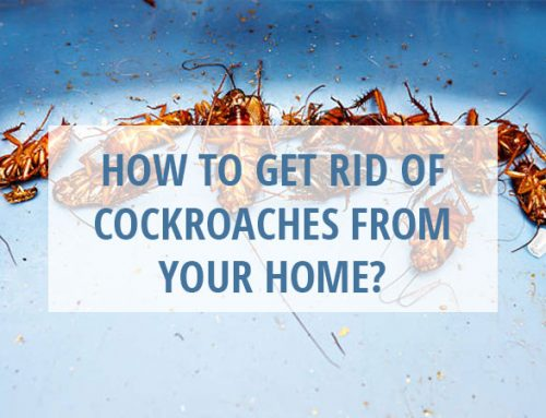 How to Get Rid of Cockroaches from Your Home?