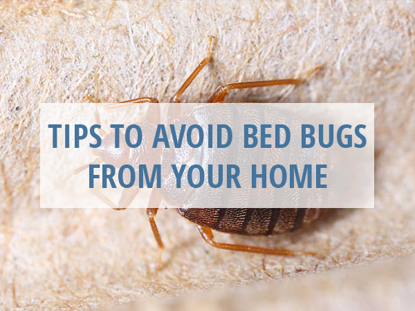 Tips to Avoid Bed Bugs from Your Home